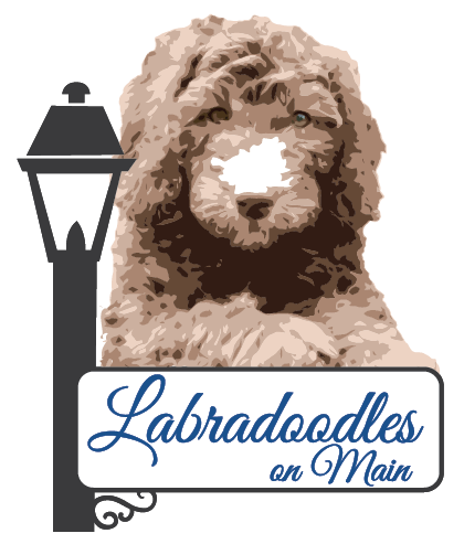 Labradoodles on Main